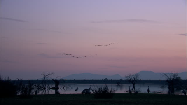 European Cranes (Grus grus) in flight over wetland and lake, North East Extremadura in Dehesa.
