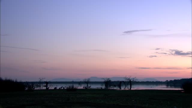 european cranes (grus grus) on wetland shore, north east extremadura in dehesa. - pastel stock videos & royalty-free footage