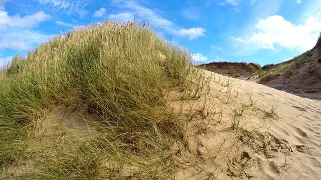 european marram grass dunes / sylt - germany - marram grass stock videos & royalty-free footage
