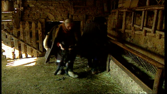 vidéos et rushes de romania and bulgaria to join; tx 30.1.1997 bulgaria: sofia: ext ramshackle farmhouse int feed being laid out in trough in barn as sheep led in ext... - roumanie
