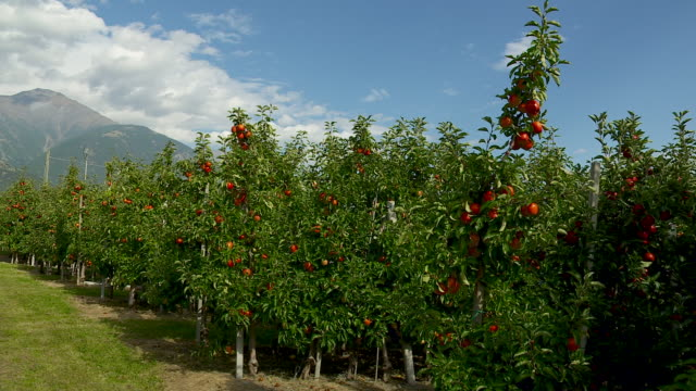 Europe's best apple growing areas, south tyrol