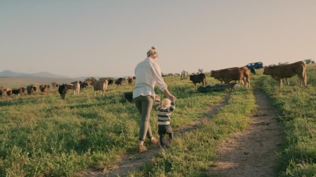vídeos y material grabado en eventos de stock de incluso la salida al patio trasero más simple puede ser una aventura - ganado domesticado