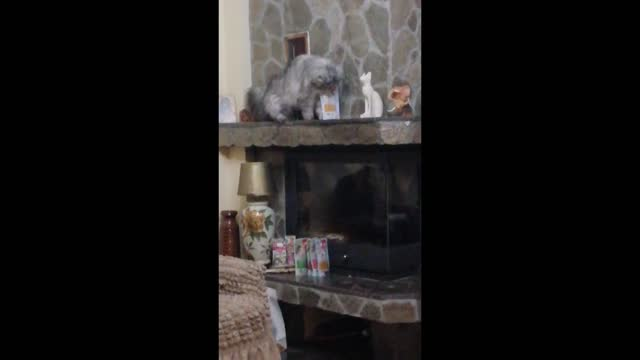 even though only 5 minutes prior oskar got awarded with her favourite treats , she couldn't get enough of them. when she thought no one was watching,... - former stock videos & royalty-free footage