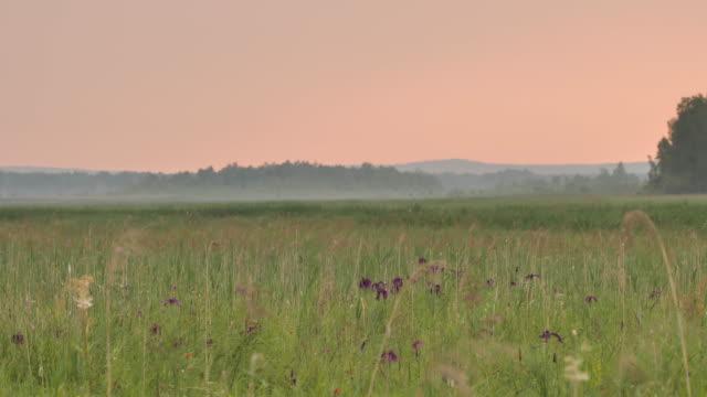 stockvideo's en b-roll-footage met avond en mist-khingan nature reserve - berk