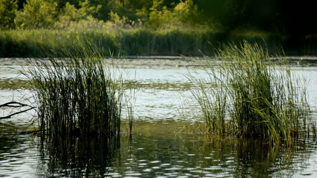 Evening atmosphere at the Wernsdorfer lake near Berlin