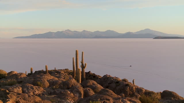 evening landscape view of uyuni salt lake, bolivia - cactus silhouette stock videos & royalty-free footage