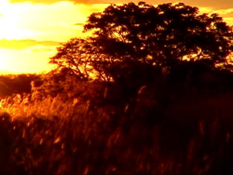 vídeos de stock e filmes b-roll de noite de luz - alto contraste