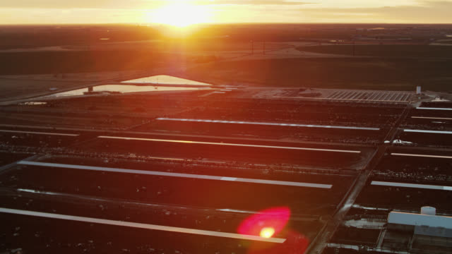 evening sunlight shining down on cattle feedlot - drone shot - cattle stock videos & royalty-free footage