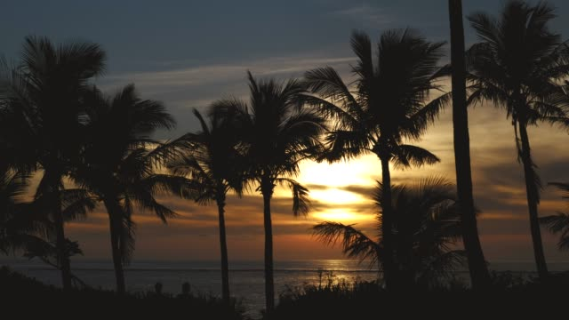 vidéos et rushes de evening view of the coast with palm trees - palmier