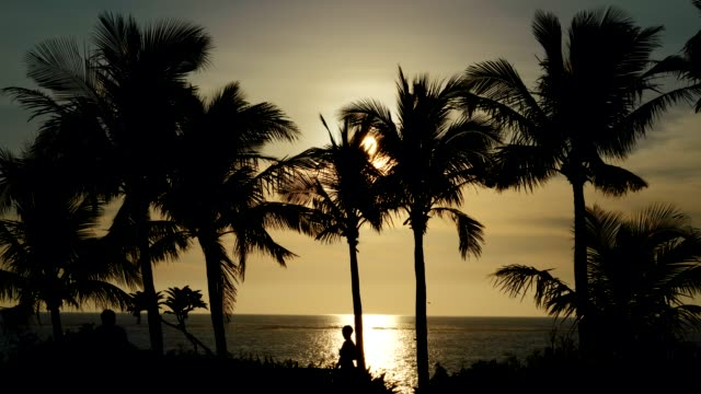 evening view of the coast with palm trees - 静かな情景点の映像素材/bロール