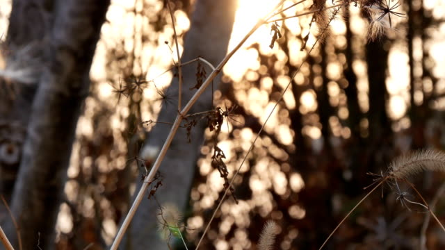 evening woods in winter - leopard stock videos & royalty-free footage