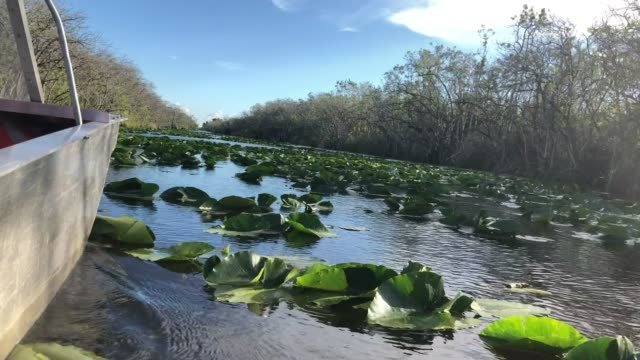 everglades by airboat - everglades national park stock videos & royalty-free footage