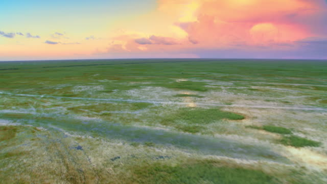 aerial everglades, fl at sunset - florida us state stock videos & royalty-free footage