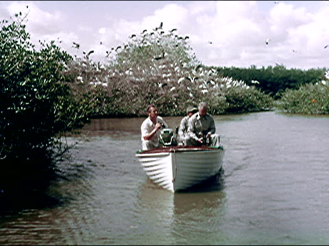 vidéos et rushes de 1956 everglades national park, florida - faune sauvage