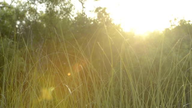 Everglades National Park Sunset Sawgrass Nature Background