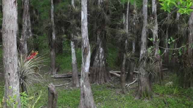vídeos de stock, filmes e b-roll de everglades national park - processo vegetal