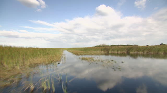 WS POV Everglades National Park with blue sky / Fort Lauderdale, Florida, United States