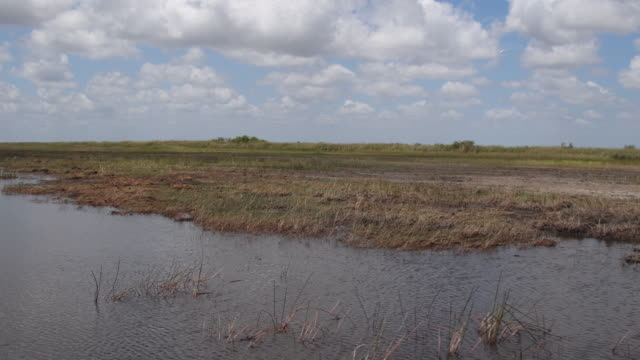 everglades swamp in miami city, united states - florida us state stock videos and b-roll footage