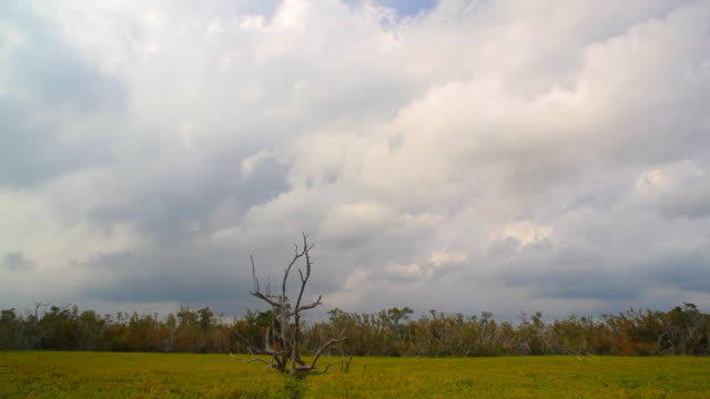 everglades time lapse - everglades national park stock videos & royalty-free footage
