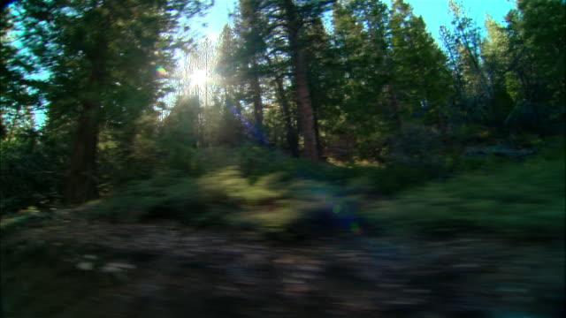 vídeos de stock, filmes e b-roll de ws evergreen trees growing along roadside in sierra national forest / fresno county, california, usa - fresno