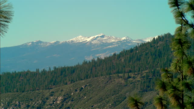 vidéos et rushes de ws evergreen trees growing near snowcapped sierra nevada mountains in sierra national forest / fresno county, california, usa - fresno