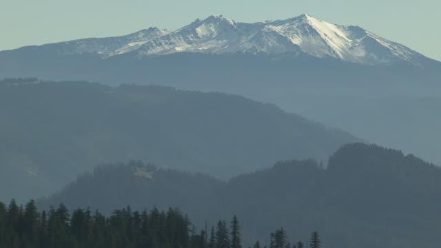 MS AERIAL Evergreen trees to reveal Diamond Peak / Oregon, United States