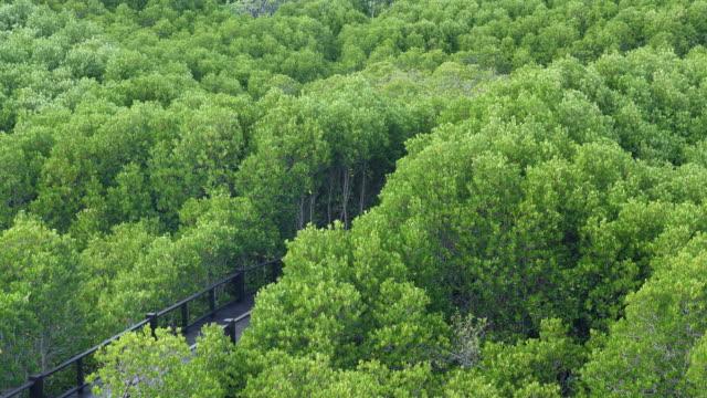 vidéos et rushes de vue d'arbres d'evergreen, forêt tropicale de mangrove - image dépouillée
