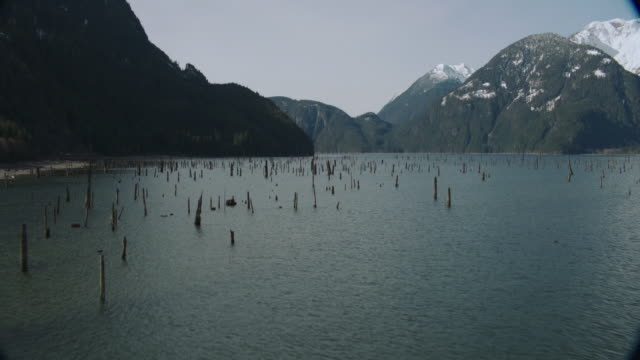 aerial evergreen-covered hillsides and mountains sprinkled with snow surrounding calm bay waters with woody plants rising up / vancouver, british columbia, canada - baumstumpf stock-videos und b-roll-filmmaterial