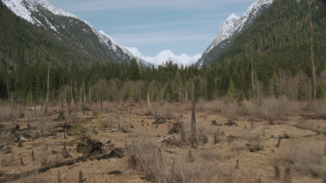 aerial evergreen-covered hillsides and mountains sprinkled with snow overlooking dry land with woody plants on a sandy shore / vancouver, british columbia, canada - ceppaia video stock e b–roll