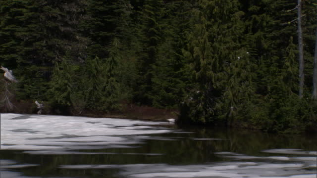 evergreens border an icy river below snow-capped mount  rainier. - mt rainier national park stock videos & royalty-free footage