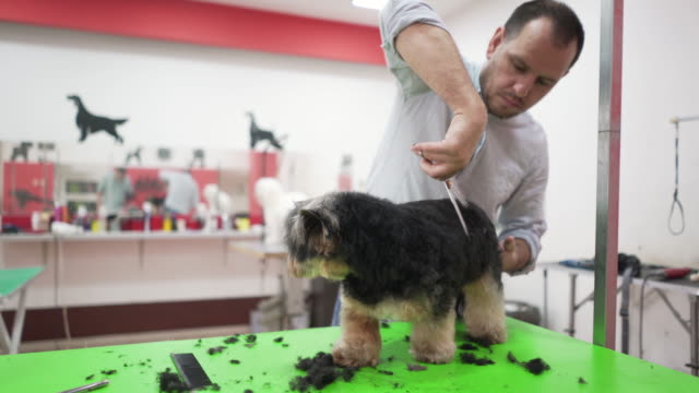 every pet needs a little pampering and professional care - grooming stock videos & royalty-free footage