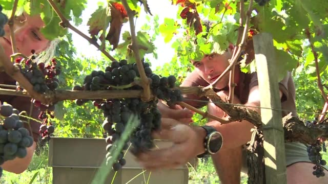Every year an increasing number of young people from outside of France travel to the Bordeaux region to experience the grape harvest and deepen their...