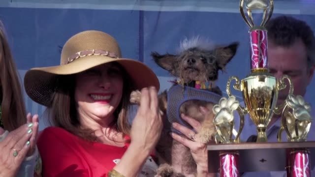 every year ugly dogs from across the country come to petaluma california to compete in the world's ugliest dog competition - ugliness stock videos & royalty-free footage