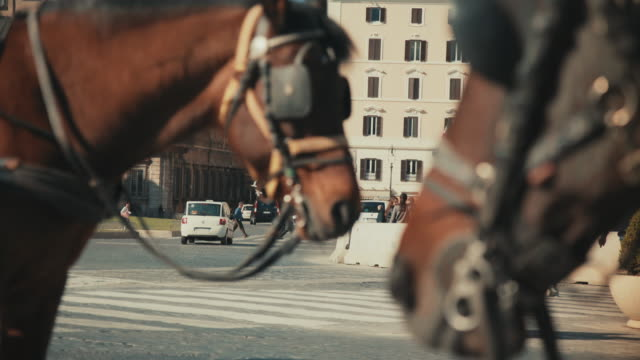 stockvideo's en b-roll-footage met dagelijks leven in rome, italië: botticella paard coach - paard en wagen