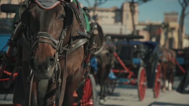 tägliche leben in rom, italien :  botticella pferd trainer - pferdeantrieb stock-videos und b-roll-filmmaterial