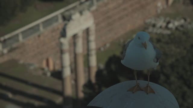 Everyday life in Rome: seagulls and ruins