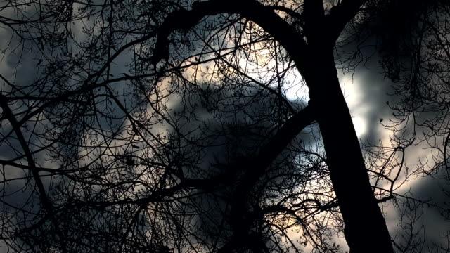 vídeos de stock, filmes e b-roll de mal árvore - evil