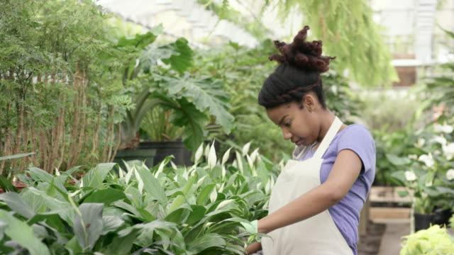 Examining Plant Growth