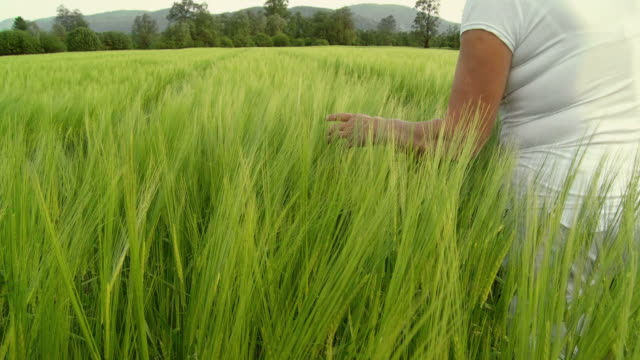 HD-KRAN: Untersuchen der Weizen