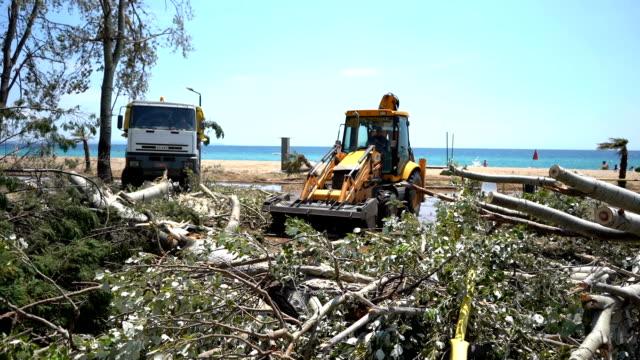 excavator clearing away broken tree - pala meccanica video stock e b–roll