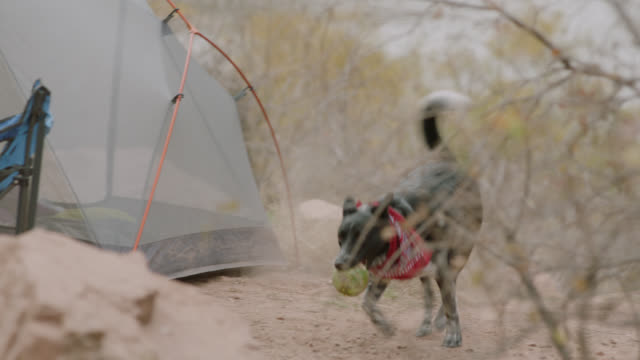 Excited dog runs around camp site with ball.