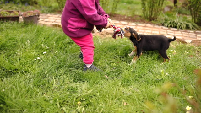 excited little girl playing fetch with her mixed breed puppy at the backyard - focus on background stock videos & royalty-free footage