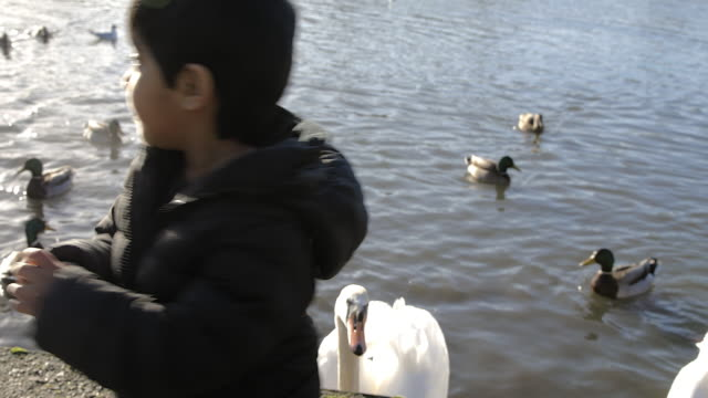 excited young boy takes bread from dad and throws it to the ducks, shot over shoulder. - bread stock videos & royalty-free footage