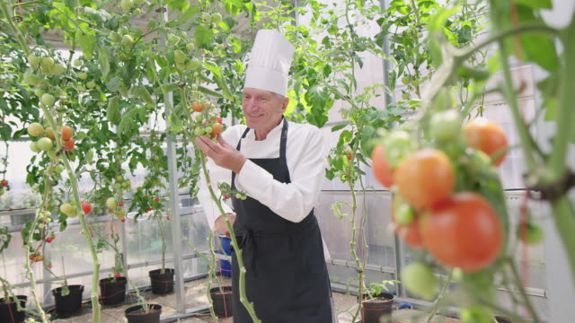 executive chef at hotel organic garden - chef's hat stock videos & royalty-free footage
