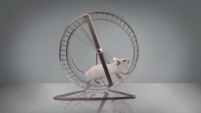 exercising rodent running in a wheel - circle stock videos & royalty-free footage