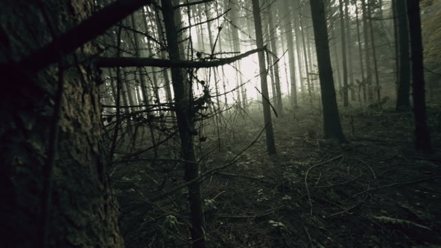 pov exhausted man walking in the forest - woodland stock videos & royalty-free footage