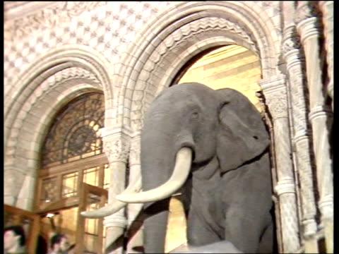 exhibit moves rooms at natural history museum; england: london: natural history museum: head of huge statue of elephant being moved through archway /... - däggdjur bildbanksvideor och videomaterial från bakom kulisserna