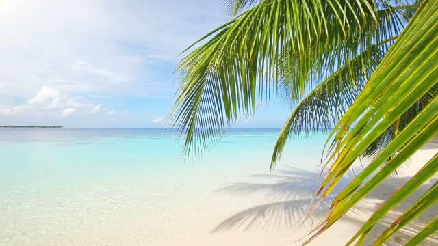 vídeos y material grabado en eventos de stock de playa exótica - palmera