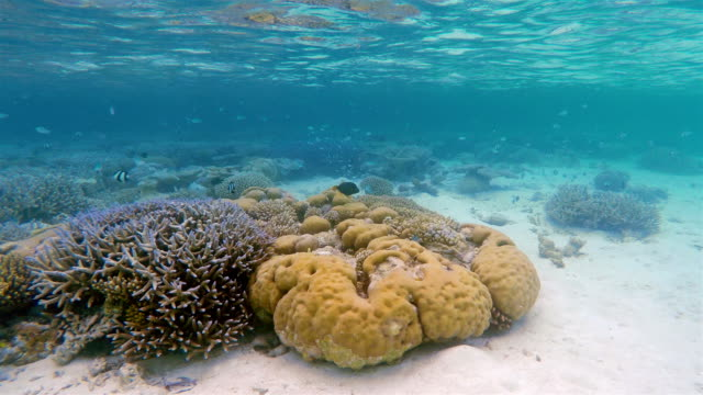 exotic coral reef undersea - ari atoll stock videos & royalty-free footage