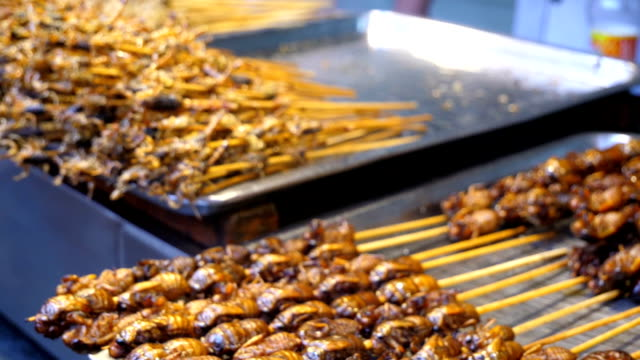 exotic food in china - cricket insect stock videos and b-roll footage